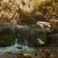 Фрагмент горного сая. :: Ольга Нагаева