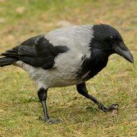 Птица :: Юрий Никитин