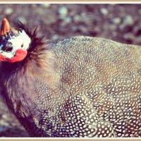 птица с рогом на голове! :: Natalya секрет