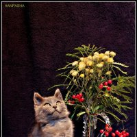 не запланированный натюрморт . :: Ханпаша Джаватханов