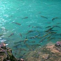 Рыбное местечко :: Наталья Нарсеева