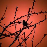 Грусть на закате :: Boris Khershberg