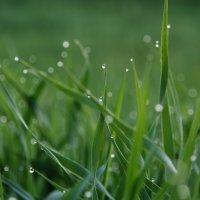 трава, роса :: Мария Surveyor