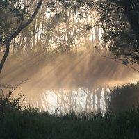 первые лучи солнца :: Мария Surveyor
