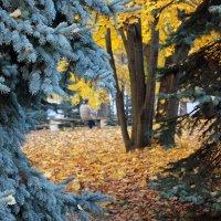 Окно в осень :: Светлана З