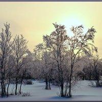 Утро :: Vasiliy Sorokhan