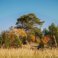 Вдоль побережья Белого моря шикарнейшая природа наша северная. :: Лариса Сафонова