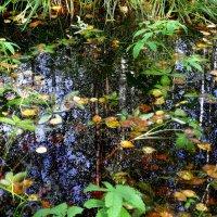 .....из жизни лесной лужи...5.... :: Ира Егорова :)))