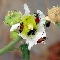 Весна :: Ashot M. Pogosyants