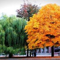 лето-осень) :: Barbara S
