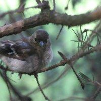 Птичка! :: Катерина Творогова