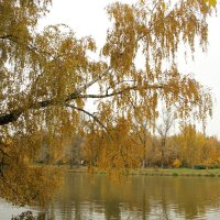 Берёза над водой :: esadesign Егерев