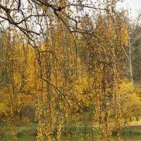 Осенние нити :: esadesign Егерев