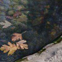Про листики на воде :: Татьяна Хромова
