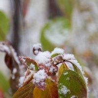 Первый снег :: Дмитрий Николаев
