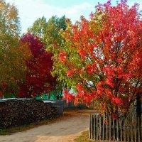 яркие краски осени :: Александр Преображенский