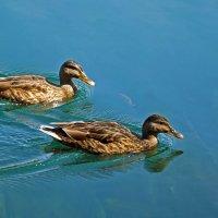 Hunters for fish :: Roman Ilnytskyi