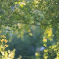 Осень... :: Вера Арасланова