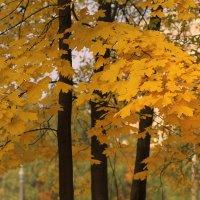 Листья желтые... :: Nonna