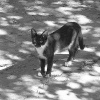 черно-белый кот :: Алина