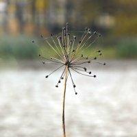 Зонтик... :: Олеся
