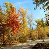 Осень в Гидропарке  5 :: Ростислав