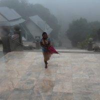 Внутри тучи (самая высокая гора Таиланда, 2565 м) :: Владимир Шибинский