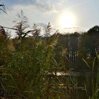 А у речки,у реки... :: Олеся