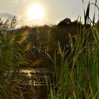 Осенний вечер на реке... :: Олеся