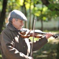 Осенние мелодии :: Николай Малявко