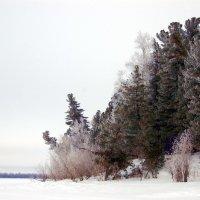Зимний лес :: Valeriy Somonov