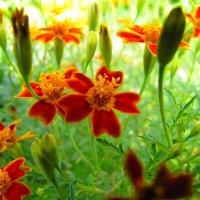 Цветочные джунгли :: Игорь Мукалов