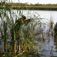 Рыбалка на накрывалки :: Светлана Ропина
