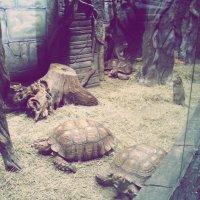 Черепахи катают обезьян :: Наталья ***