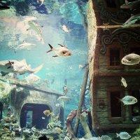 Подводный мир :: Наталья ***