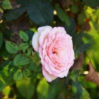 цветок :: Наталья Мерзликина