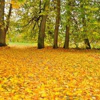 Золотая осень :: Александр Сергеев