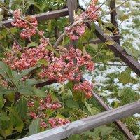 Цветы на фоне снега :: Наталья Золотых-Сибирская