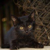 Черный кот :: Eugenius Ivanov