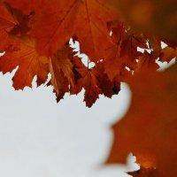 Осень...Клен...Красные листья... :: Nasty_ Rom.