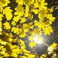 в моём дворе осень всегда впечатляющая :) :: Юлия Аверьянова