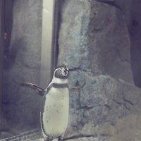 позитивные ребята-пингвинята :: Юлия Аверьянова