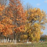 Осень :: Казимир Буйвис