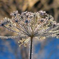 Серебро зимы :: Victor Klyuchev
