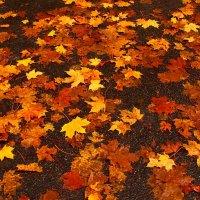 Мокрый октябрь :: Lena Li