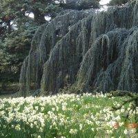 Никитский ботанический сад :: Екатерина