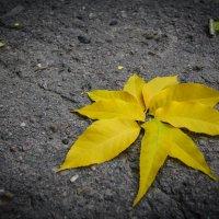 Осень моими глазами :: Аля Кубекова