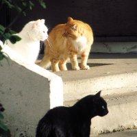 Кошки :: Вера Бойко