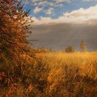 Багрец и золото. :: Игорь Гришанин