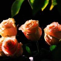 роза чайная :: Alexsei Melnikov
